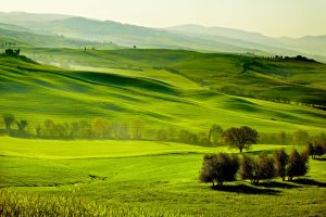 Countryside, San Quirico ´Orcia , Tuscany, Italy